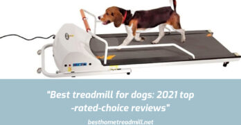 Best treadmill for dogs_ 2021 top-rated-choice reviews